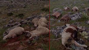 Yıldırım dehşeti... Onlarca koyun öldü...