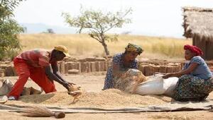 FAO: Gıda fiyatları istikrarlı, tahıl üretiminde düşüş bekliyoruz