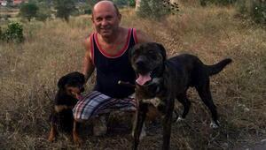 Marmariste iki köpek zehirlenerek öldürüldü