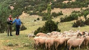 Dinarda canlı hayvan hırsızlığı