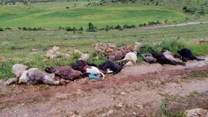 Yıldırım düşmesi sonucu çobanyaralandı, 12 keçi telef oldu