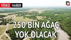 250 bin meşe ağacı yok olacak