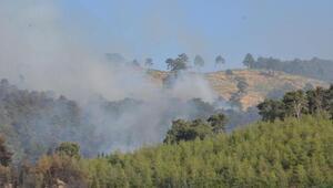 Aydında orman yangını/ Ek fotoğraflar