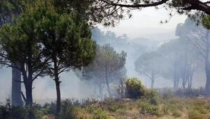 Alevler 2 dönüm çamlık alanı küle çevirdi