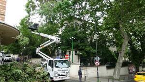 İstanbul Valiliğinin bahçesindeki ağaç devrildi