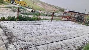 Balâ'da sel ve dolu tarım alanlarını vurdu