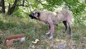 Manisada sokak hayvanları ölüme terk ediliyor iddiası