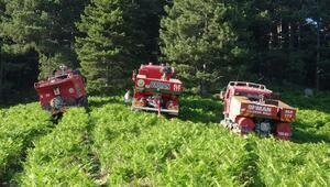 Kazdağlarındaki yangında erken müdahale ağaçları kurtardı