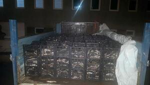Ahlatta kaçak avlanan 2 ton Van balığı ele geçirildi