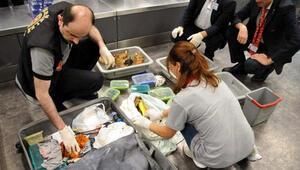 Rus sahibi tarafından teslim alınmayan valizden çıkanlar şaşırttı