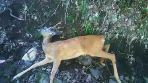 Karaca, av tüfeğiyle öldürüldü