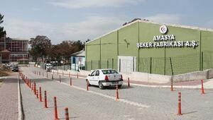 Amasya Şeker'den üreticiye 15 Milyon TLlik avans