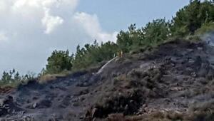 Muğlada yerleşim yeri yakınında orman yangını