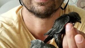 Yaralı kuşlara evini açtı, kurtarıcıları oldu