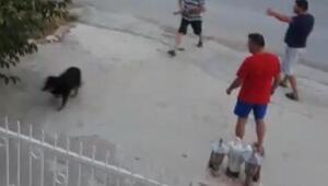 Kuşadasında köpeğe tüfekli saldırıya tepki