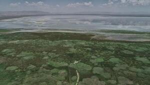 Yağışlar, Akşehir Gölüne can suyu oldu