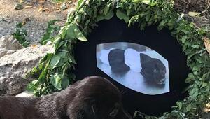 O yavru köpeğin bulunduğu yere siyah çelenk bıraktılar