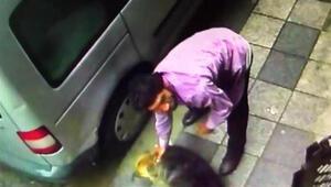 Herkesi sarsan görüntüleri izleyip harekete geçtiler... O köpekle ilgili gerçek ortaya çıktı