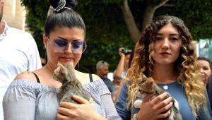 Hayvanseverler şiddete karşı yasa istiyor