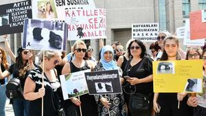 """Hayvanseverlerden """"cezalar arttırılsın"""" eylemi"""