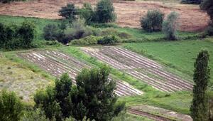 Boluda sağanak ve dolu tarım arazilerine zarar verdi