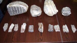 2 milyon yıllık mamut fosilleri, Samsun Şehir Müzesi'ni bekliyor