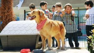 Trabzonda her okula 1 kulübe 1 köpek