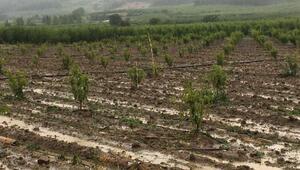 Bilecikin köylerinde dolu ve şiddetli rüzgar zararı
