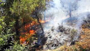 Anamurda orman yangını