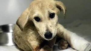 2 aylık yavru köpeğin av tüfeği ile yaralanmasına 1 gözaltı