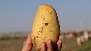 Patates ve soğan fiyatlarında hasat düşüşü