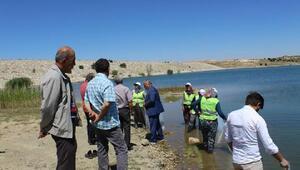 Handaki gölete 13 bin yavru balık salındı