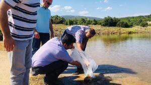 Denizlide göl ve göletlere 125 bin yavru sazan bırakıldı