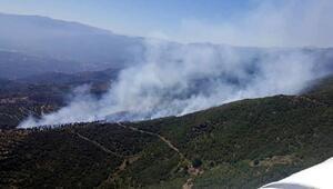 Yangında 2 hektar fıstık çamı ormanı kül oldu