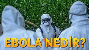 Ebola nedir Ebola belirtileri neler