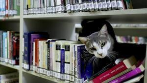 Kedi Paşa kütüphanenin maskotu oldu