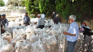 Manisa ve ilçelerinde Haşhaş kapsülü ve ürünlerin alımına başlandı