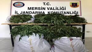 Mersinde uyuşturucu madde operasyonu