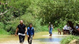 Afrin özgürleşti, Suriyeliler 5 yıl sonra piknik yaptı