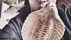 Arefi kobra ısırdı
