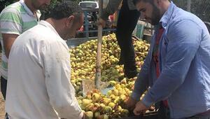 Akdeniz meyve sineğine kültürel önlem