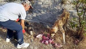 Botan Vadisinin başıboş köpeklerini besliyor