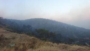 Hatay'da orman yangını (2)