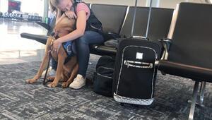 Panik atak durumlarında insan dostuna yardımcı olması için eğitilen köpek