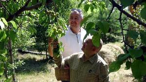 2 bin 400 rakımda 13 çeşit organik meyve yetiştirdiler