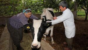 Hayvan hastalıklarına karşı 292 bin 112 aşılama