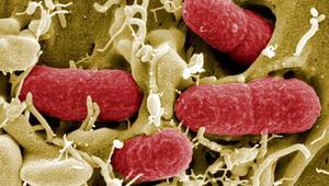 Rota virüsü nedir Rota virüsü enfeksiyonu