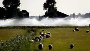 Hollandada iki dinden görevliler ilk kez yağmur duasına çıktı