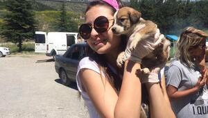 Yüzlerce sokak köpeğinin evi: Patiliköy
