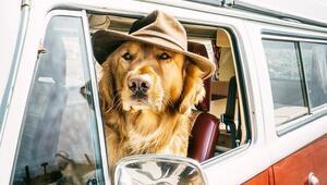 Dünyayı gezen beş gezgin köpek